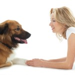 Dog Tricks: How To Teach Your Dog To Cross His Paws