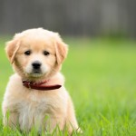 Dog Training : Teaching Your Dog The Basic Command Of 'Come Here'