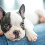Diabetes : How Your Dog May Become A Diabetic
