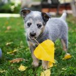 Choosing Healthy Foods for Your Dog